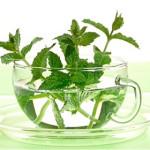 Растение для облегчения зубной боли